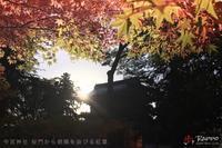今宮神社 朝散歩 昨日の続き - 歩け おっさん!