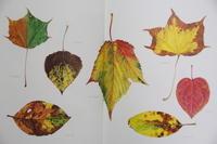 落葉が舞うとき - 絵本だまり