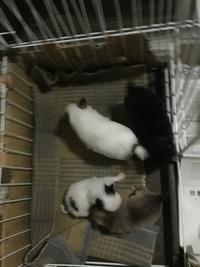 出産ラッシュ - mysweetdog