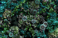 芸術の秋 - LIVING PHOTO