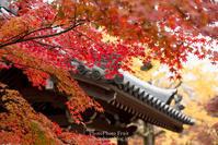 #177 京都嵐山 - PhotoPhoto Fruit