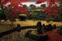雨の九品寺 - toshi の ならはまほろば
