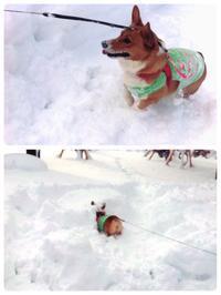 雪遊び♪ - タイ式マッサージ サイチャイ