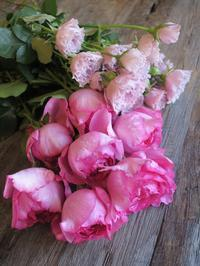 新しいレッスン…… - Flower Supplement - Flowering for the comfort living ------- 日々の生活を、心を豊かにする花の世界