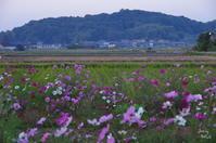 明日香村奥山 香具山 - ぶらり記録(写真) 奈良・大阪・・・