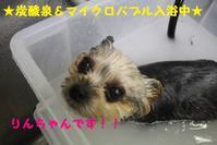 12月になりましたねぇ~!! - 犬濯屋 川村 ~ ご予約はお電話で!!043-285-6411 ~