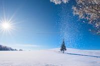冬の好きな木のBEST3 - Photo 森の声