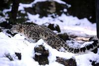 雪の中の「ミミ」と「ヴァル」 - 動物園放浪記