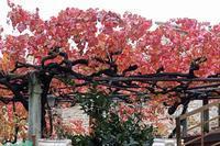 紅葉美しサグランティーノ、モンテファルコ - ペルージャ イタリア語・日本語教師 なおこのブログ - Fotoblog da Perugia