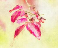 八千穂高原・松原湖3 - 光 塗人 の デジタル フォト グラフィック アート (DIGITAL PHOTOGRAPHIC ARTWORKS)