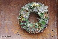 多肉のリース作り!&12月のOne-day Lesson 多肉植物の会のお知らせ - さにべるスタッフblog     -Sunny Day's Garden-
