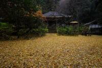 黄色の戒長寺 - ratoの大和路
