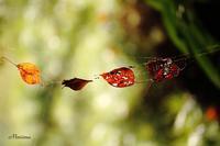 季節の落とし物 - マイ・ライフ