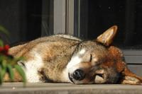 静かな冬 - 四国犬 テツカナ今日この頃