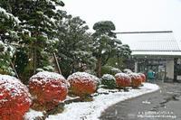 11月の初雪の市内の雪景色・・・3 - 自然のキャンバス