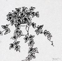 アイビーを増やす - たなかきょおこ-旅する絵描きの絵日記/Kyoko Tanaka Illustrated Diary