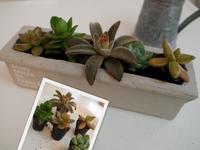 ロフトのインテリア - 小さな花アトリエ