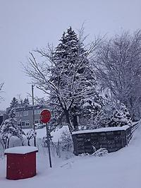 ♬冬が始まるよ~♬ - ちゃたろうと気まま日記