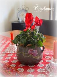 ★Cyclamen★ - Don't Worry! Be Happy!