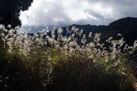朽木の針畑郷 - 写真の散歩道