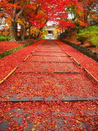 京都旅行2016年11月⑪毘沙門堂跡、圓光寺、詩仙堂、大鵬 - エリンゲル日記
