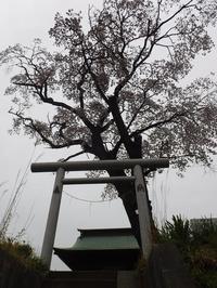 日吉神社(千波町) - みとぶら