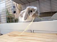 イエウサギ - usagi-time