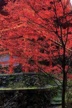 比叡山延暦寺・横川の紅葉 - 花景色-K.W.C. PhotoBlog