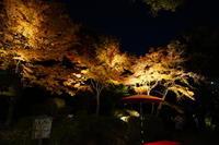 11月29日 「六義園」の紅葉ライトアップ - てしやから君の撮影日記