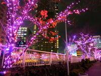 冬の桜*目黒川イルミネーション・2016 - ぴきょログ~軽井沢でぐーたら生活~