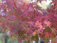 秋の京都 - Aromaticstyle
