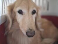 16年12月1日 ママあてにお歳暮♪ - 旅行犬 さくら 桃子 あんず 日記
