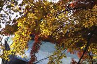 紅葉のあれやこれや---北鎌倉の巻 - くにちゃん3@撮影散歩
