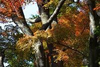 紅葉のあれやこれや---北鎌倉の巻--その2 - くにちゃん3@撮影散歩