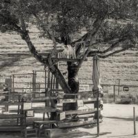 2016年12月3日 樹上の山羊 - Silver Oblivion