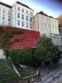 ルクセンブルグ旧市街の紅葉 - 不味くないネーデルランド