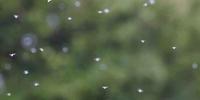 メルモ活用術 3 - はり・きゅうメルモ
