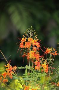 シンガポール旅行記⑬ flowers - miyabine's フォト日記~身の周りのきれい・可愛い・面白い~