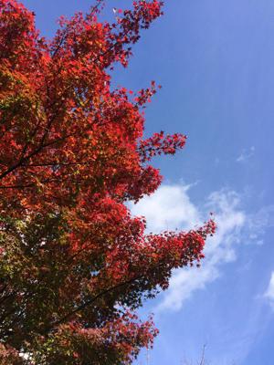 京都紅葉散歩で筋力アップ計画! - 大腸癌と私