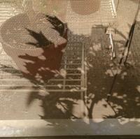 ミドリ日記:ヒイラギの意外な顔 - pantaya2_カエルの体操