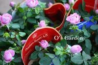 新着苗のご紹介(^^♪ - O's garden へ ようこそ~ ♪