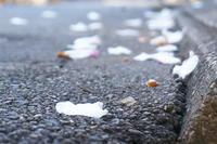 16.12.03 山茶花吹雪との戦いが始りました~♪♪(きぶんを変えてカレーうどん~まいう~♪) - 人生とは ?