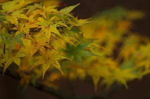 The autumn leaves - SCENE92