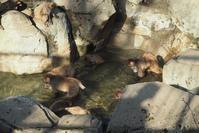 ★ サル温泉 - うちゅうのさいはて