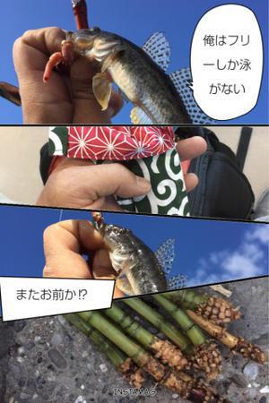 2016年12月3日 ハゼ釣って竹採って - 東京湾奥釣り Level1