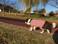公園散歩 - 犬とお散歩