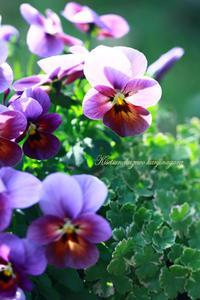 12月の庭  - 季節の風を感じながら・・・