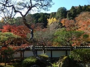 晩秋の田舎道円照寺から正暦寺へ - 寧楽悠々自然流