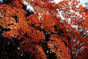 東京で一番ロマンティックな紅葉スポットは、ライトアップで人気ナンバーワンです(文京区、六義園) - 旅プラスの日記
