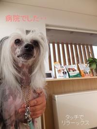 ワクチン - 毎日笑顔♪ 裸犬☆温・真珠・絆愛Ⅱ